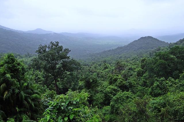 יער גשם מלמעלה