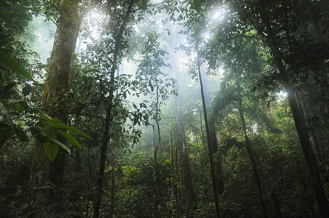 יער גשם - מבט מבפנים