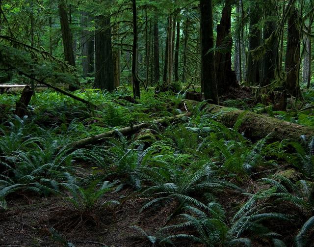 יער גשם - רצפת היער